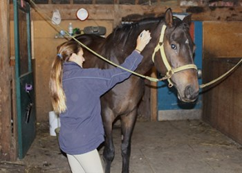 Woman petting horse at Valentia Equine Retraining Centre