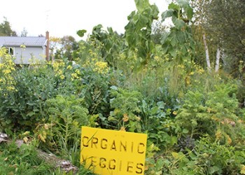 Organic vegetables at Greenshire Eco Farms