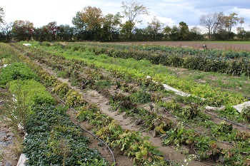 vegetable field at Lunar Rhythm Gardens