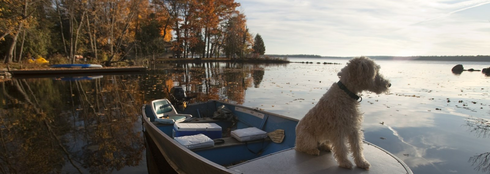 dog sitting on top of a boat
