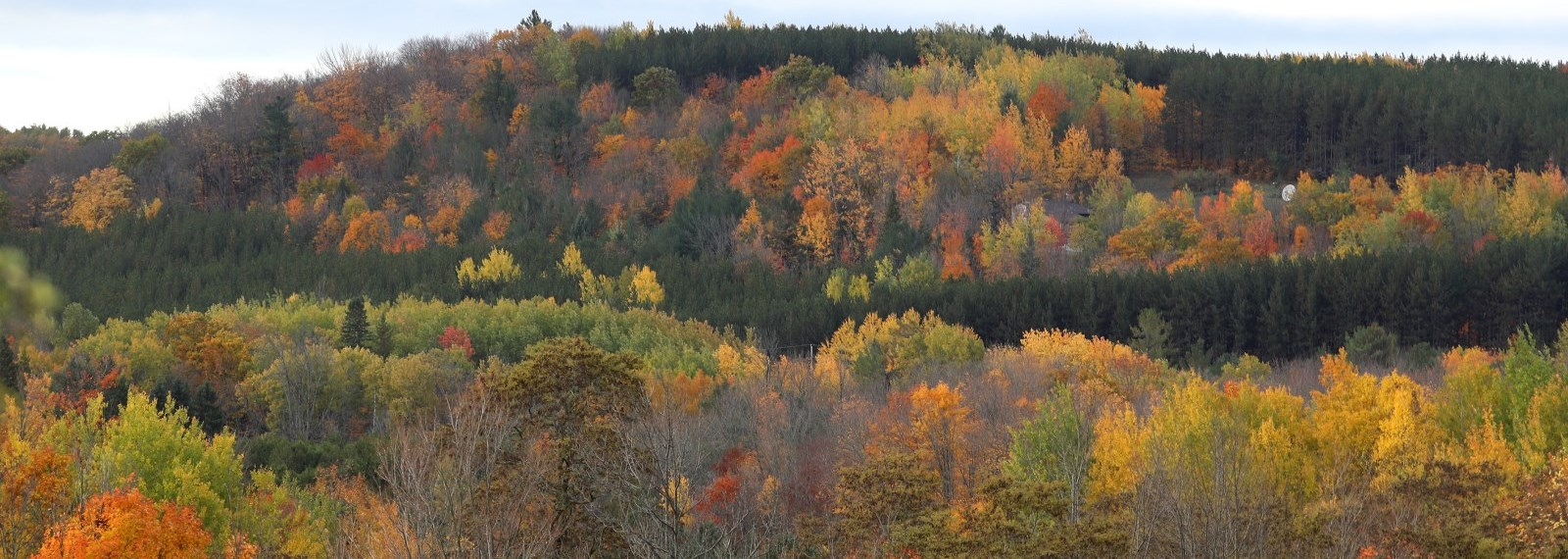 trees changing colours in the Fall