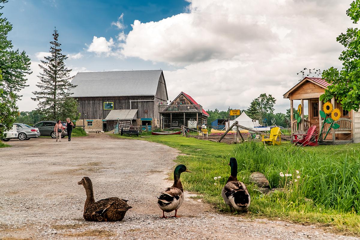 Quaker Oats Farm